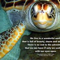 Turtle Photo with Adventure Quote