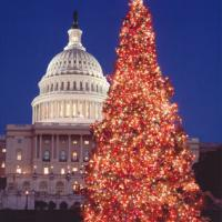 Printable US Capitol Christmas Tree - Printable Photos - Free Printable Pictures