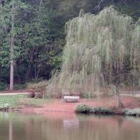 Printable Weeping Willow Tree - Printable Nature Pictures - Free Printable Pictures