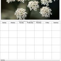 White Flowers Blank Calendar