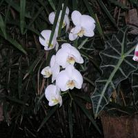 Printable White Orchids - Printable Nature Pictures - Free Printable Pictures