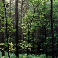 Woodland Picture