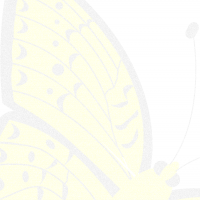 Printable Yellow Butterfly Stationary - Printable Stationary - Free Printable Activities