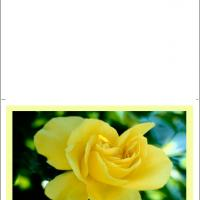 Yellow Flower Card
